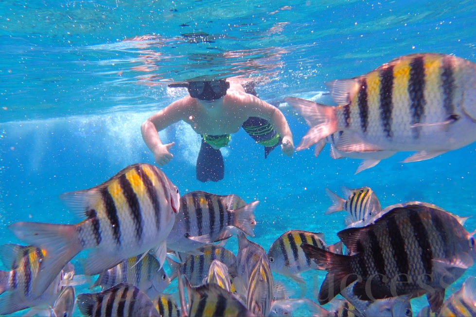 Cozumel barrier reef